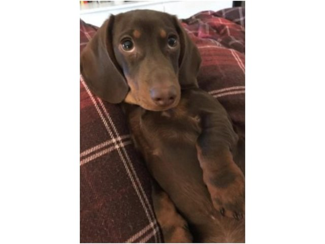 TVP officers are investigating the theft of Milo the puppy from the High Street of Chipping Norton