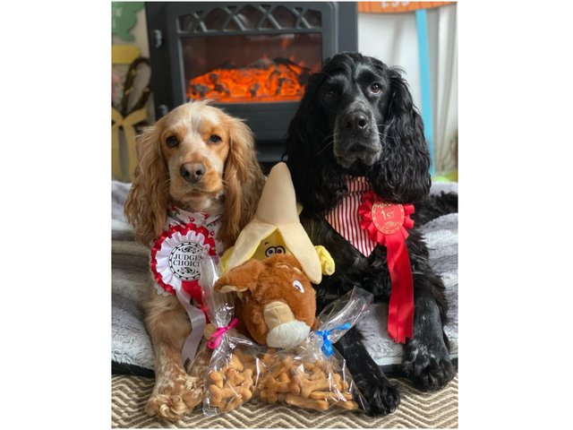 Peaches (at left) was voted 'Best in show' at the dog show hosted by Highmarket House Care Home, on North Bar Place, Banbury