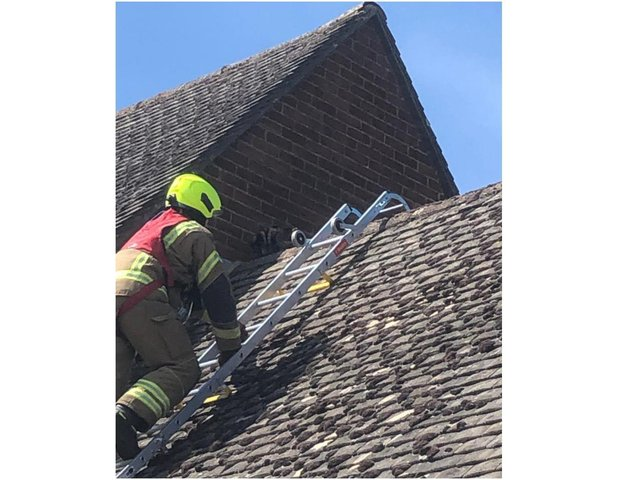 Firefighters rescued at cat from a roof in Twyford, Banbury today, Thursday May 6. (Image from Oxfordshire Fire & Rescue Facebook page)