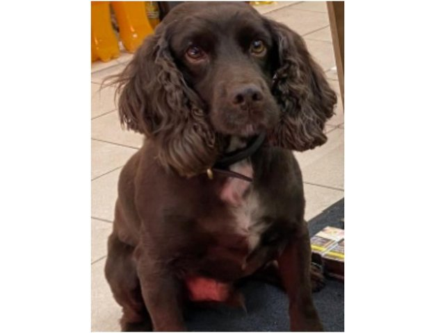 Detection dog Yoyo is a specially trained tobacco dog who has helped trading standards in their search for smuggled and fake tobacco products across the county. (Image from Oxfordshire County Council)