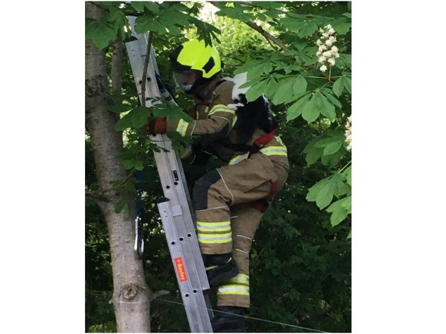 Bella the cat received a 'piggy back' ride down from a tree after being rescued by a Banbury firefighter (Image from the Banbury Fire Station Facebook page)